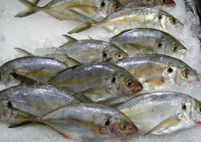 Tran i oleje rybie